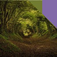 14 | VOCAZIONI Il richiamo della foresta