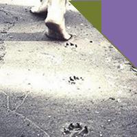 4 | DIALOGHI CON LA NATURA a passo di animalità